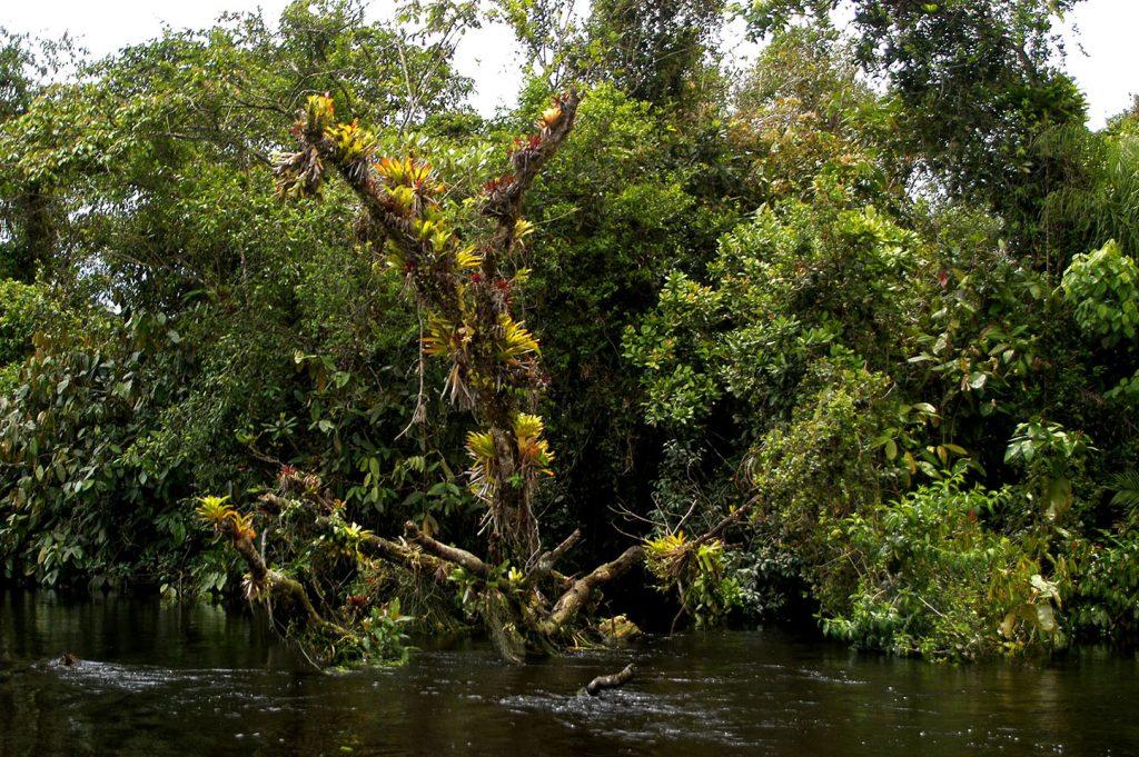 imagem de árvore tomada por bromélias