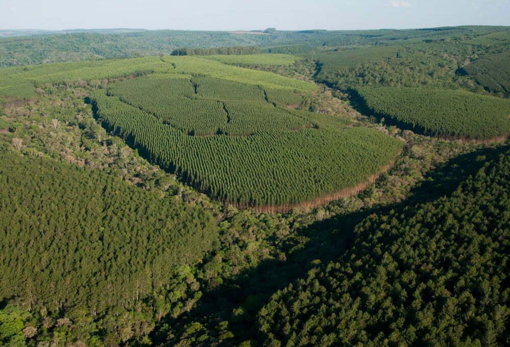 imagem de reflorestamento da empresa Klabin