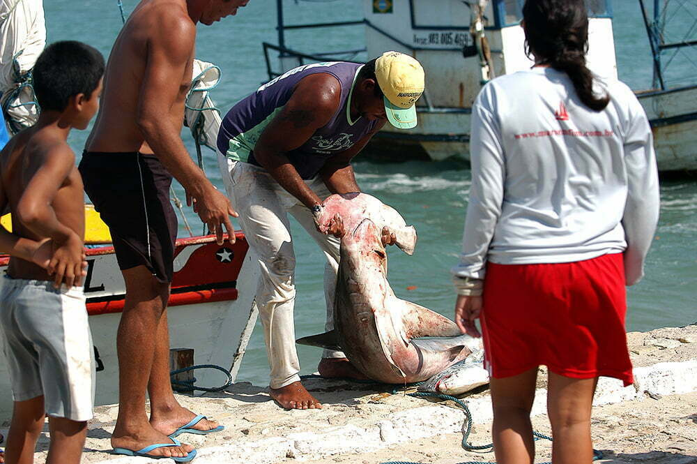 imagem de pescador com tubarão martelo