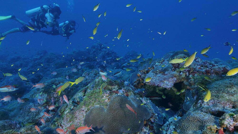 imagem de mergulhadores em banco de corais