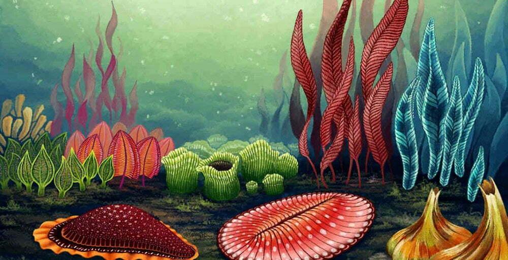 imagem de criaturas marinhas de antes da explosão cambriana.