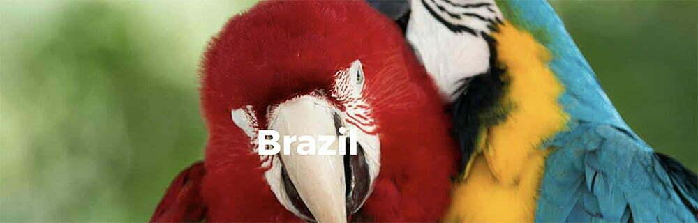 imagem de araras representam o Brasil como país de maior biodiversidade