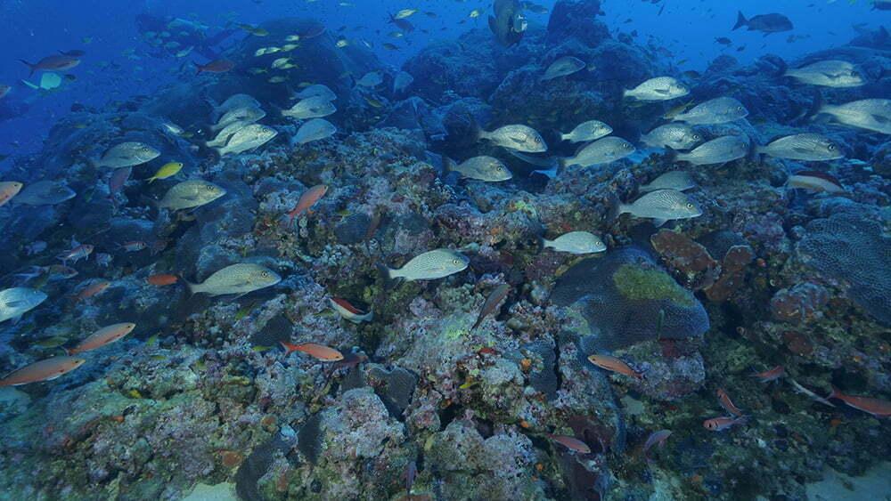 corais em Fernando de Noronha