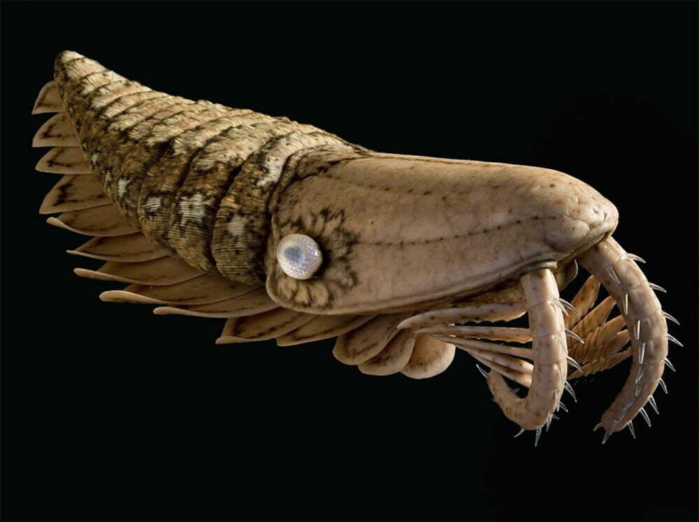 imagem de fóssil do mar do período da explosão cambriana