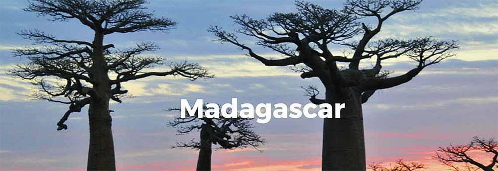 imagem de baobás de Madagascar