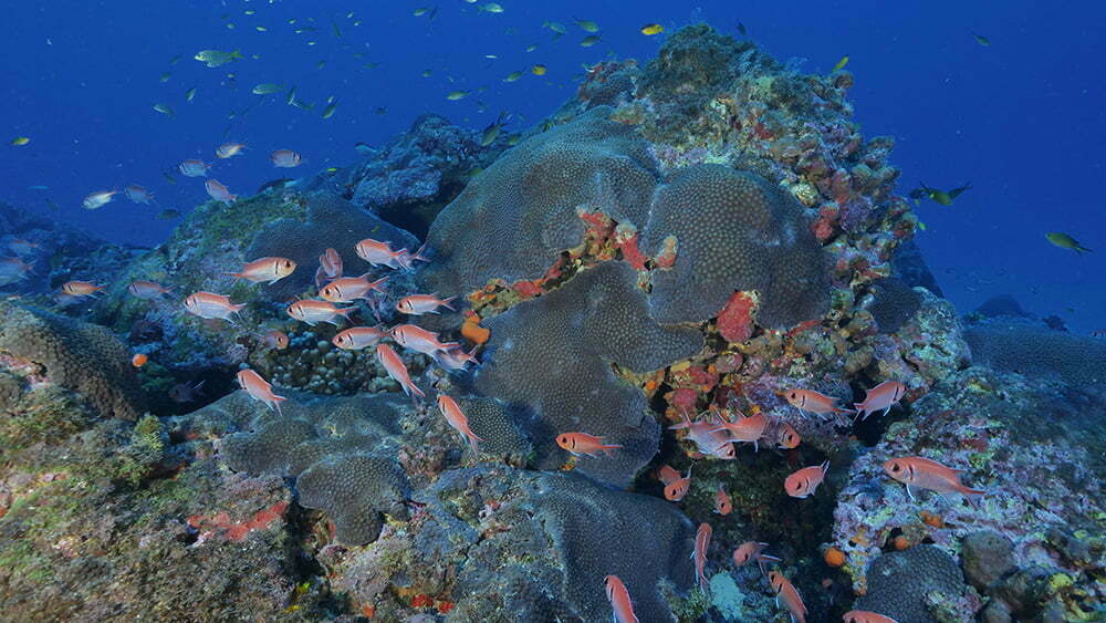 imagem de corais