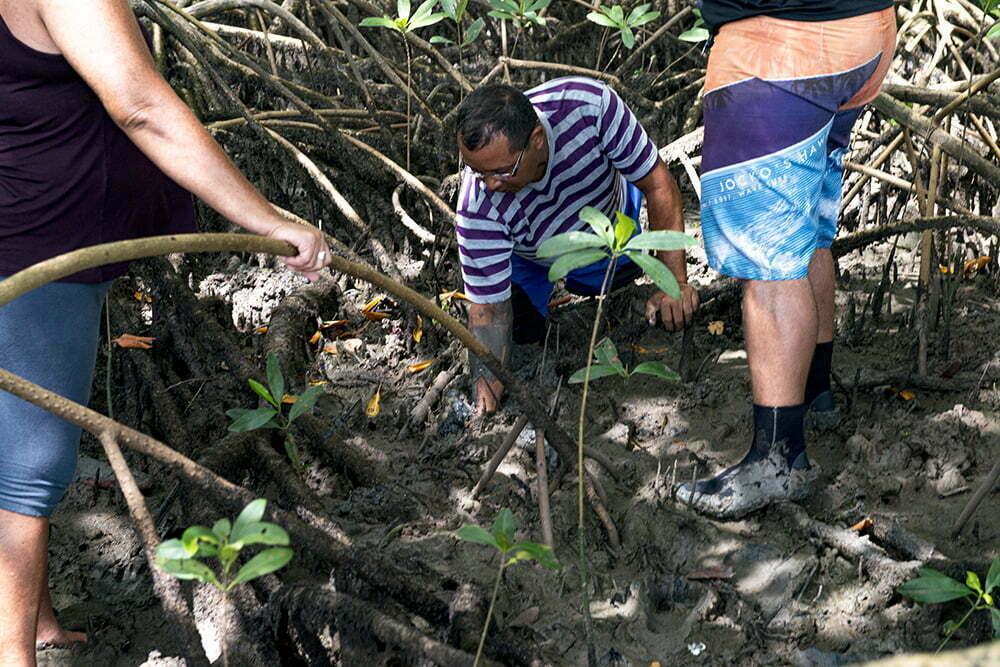 imagem de extrativista catando caranguejo no Mange