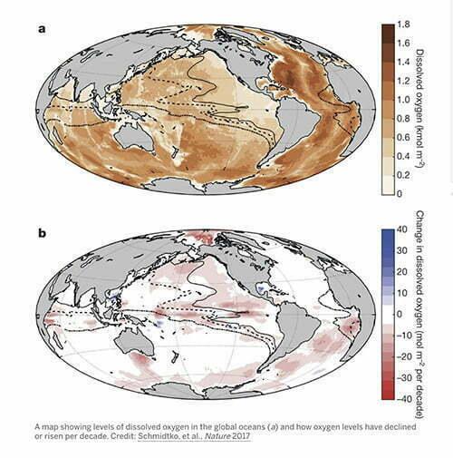 infográfico mostra queda de oxigênio nos oceanos