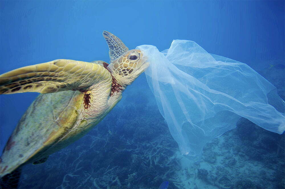 imagem de tartaruga comendo plástico