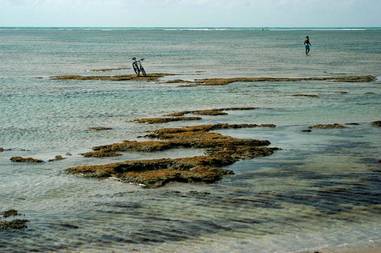imagem de recifes de corais em Alagoas