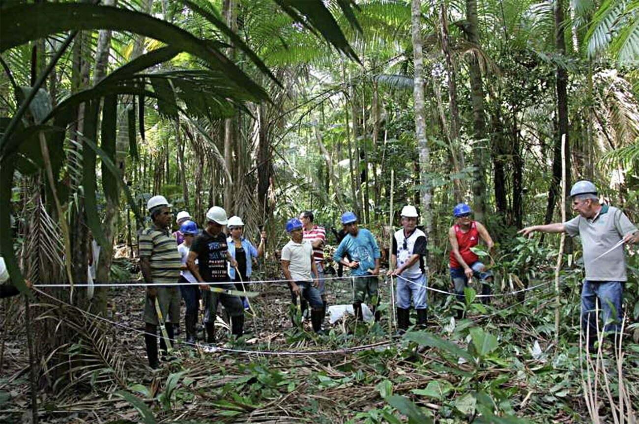 imagem de manejo de floresta de açaí