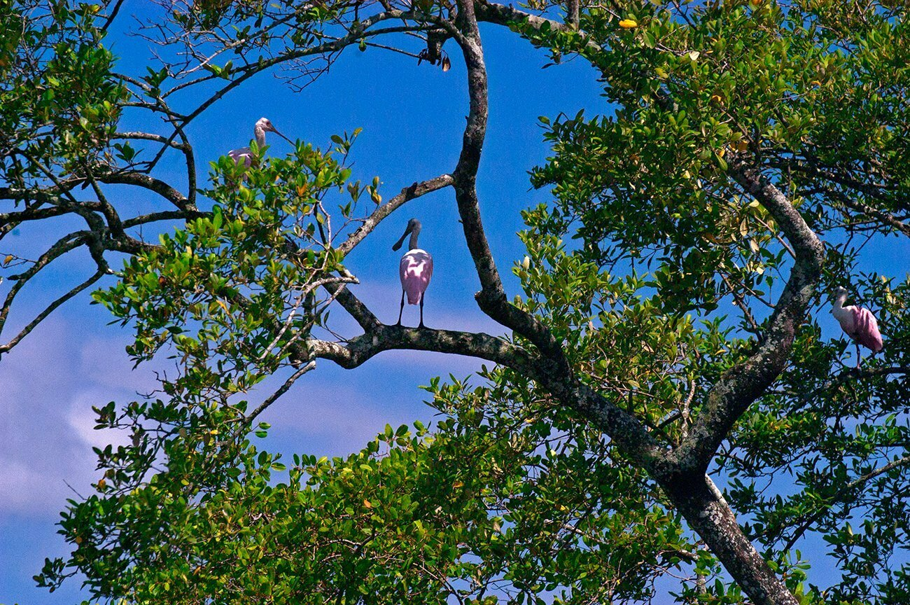 imagem de manguezal da baía de Babitonga