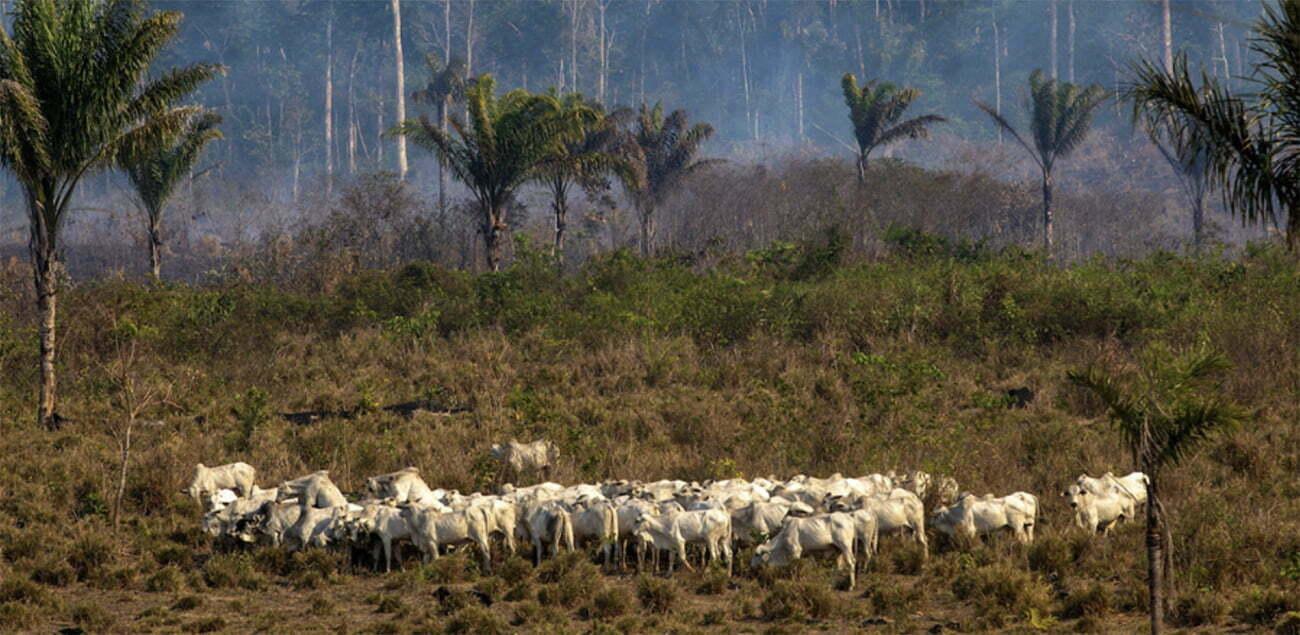 imagem de pecuária na Amazônia