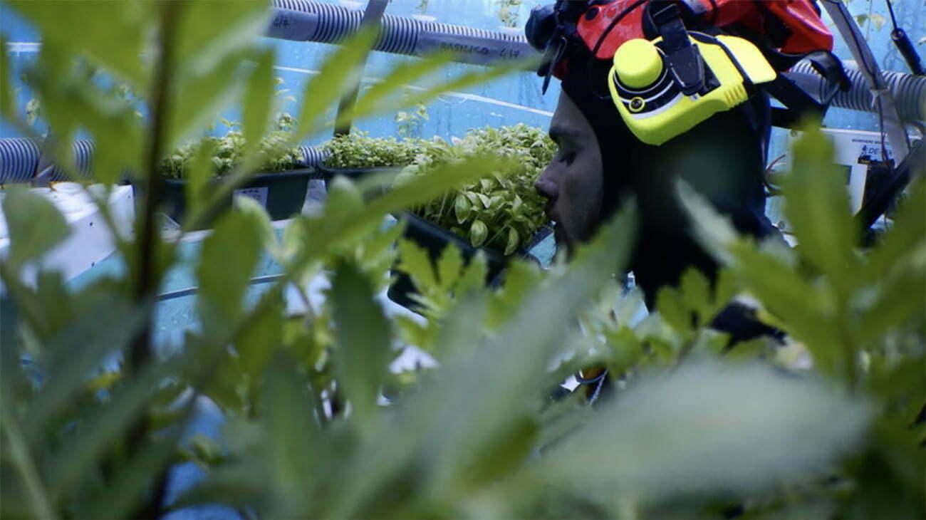 imagem de mergulhador em fazenda subaquática