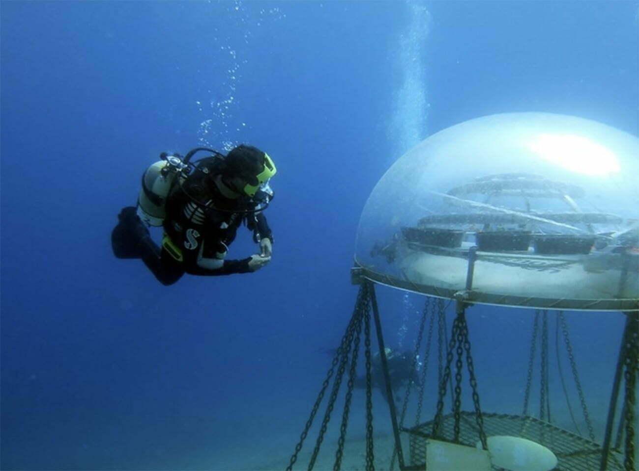 imagem de fazenda subaquática na Liguria, Italia