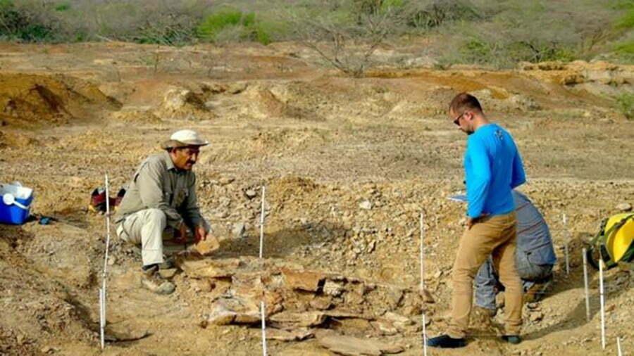 imagem de pesquisadores escavando fósseis de tartaruga gigante