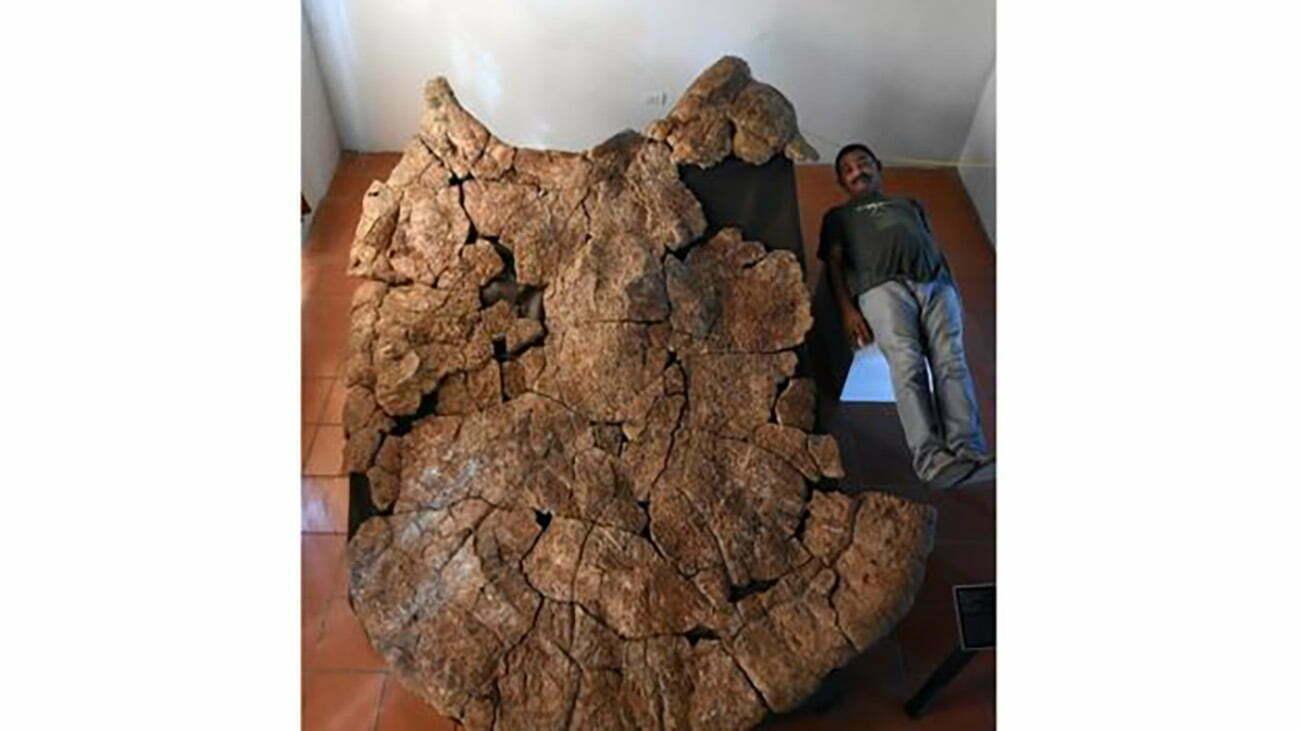 imagem de fóssil de tartaruga gigante