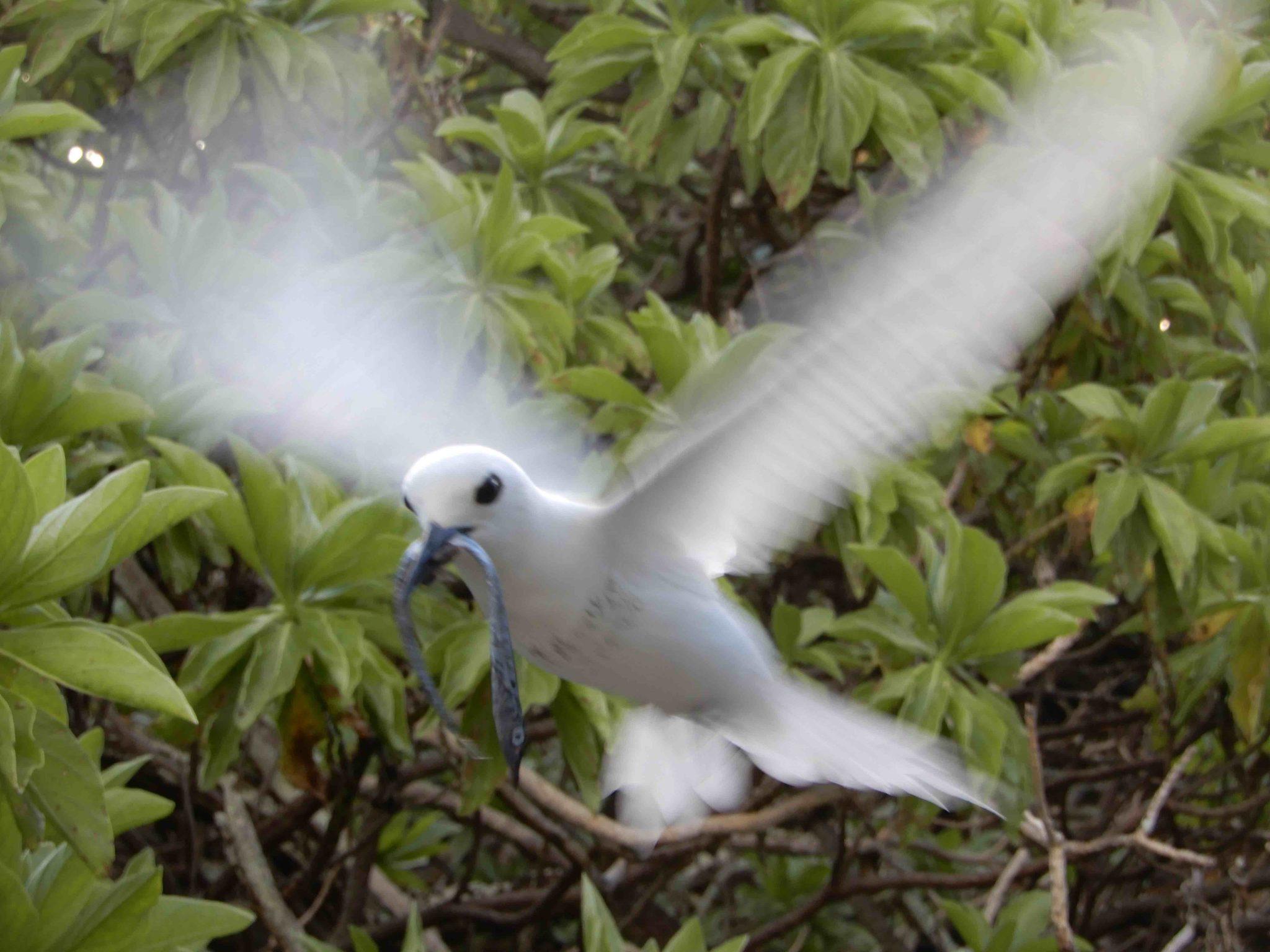 imagem de ave marinha no atol Deuci
