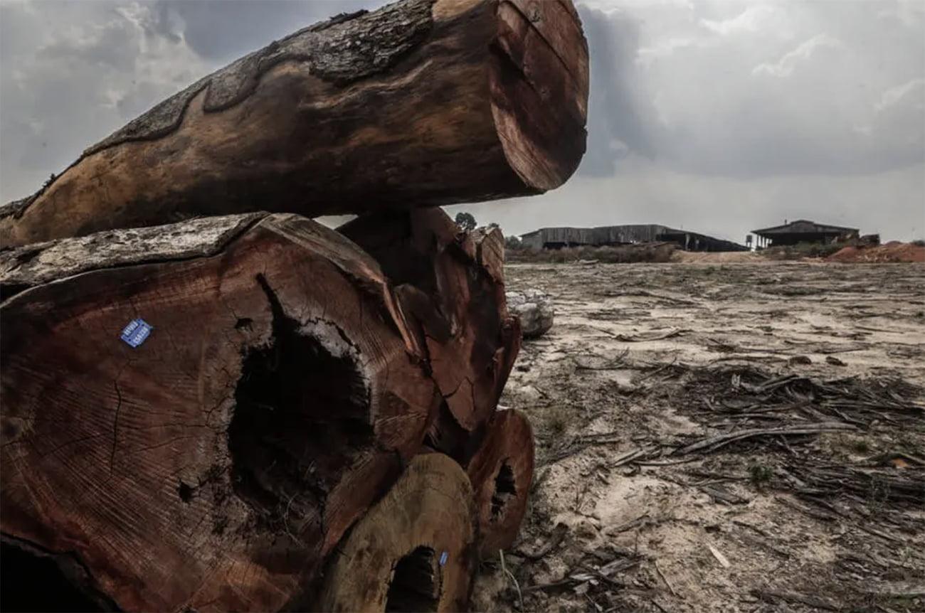 imagem de toras de árvores
