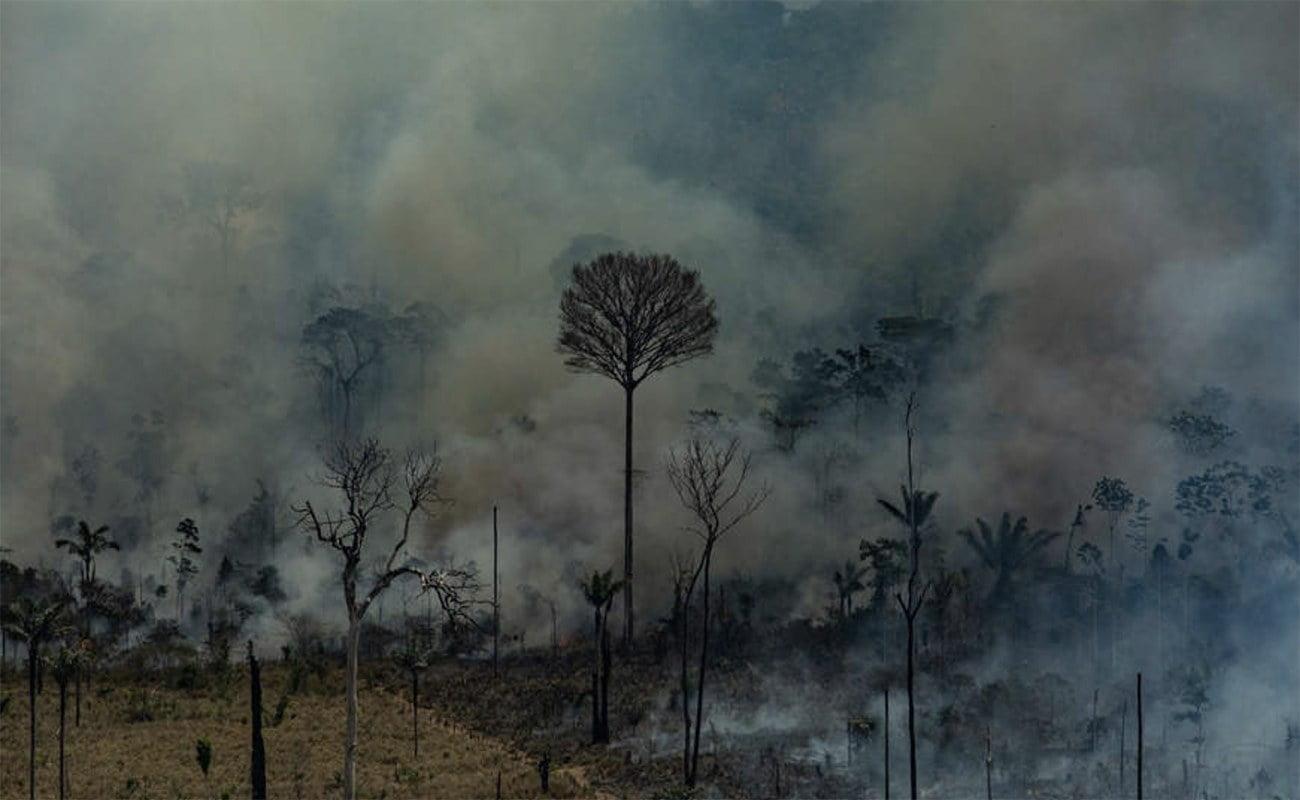 imagem de grilarem na Amazônia