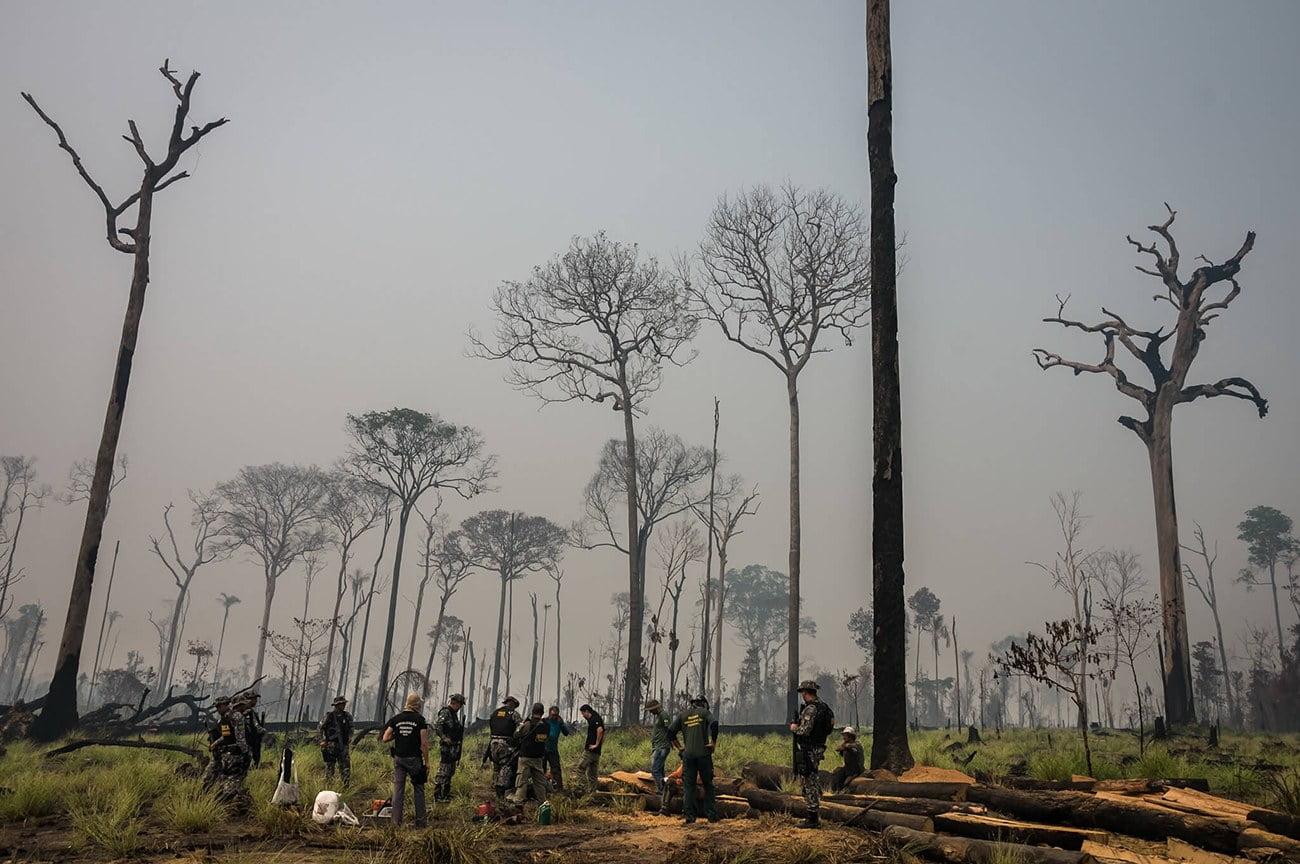 imagem de grilagem na Amazônia floresta nacional do Jamamxim.