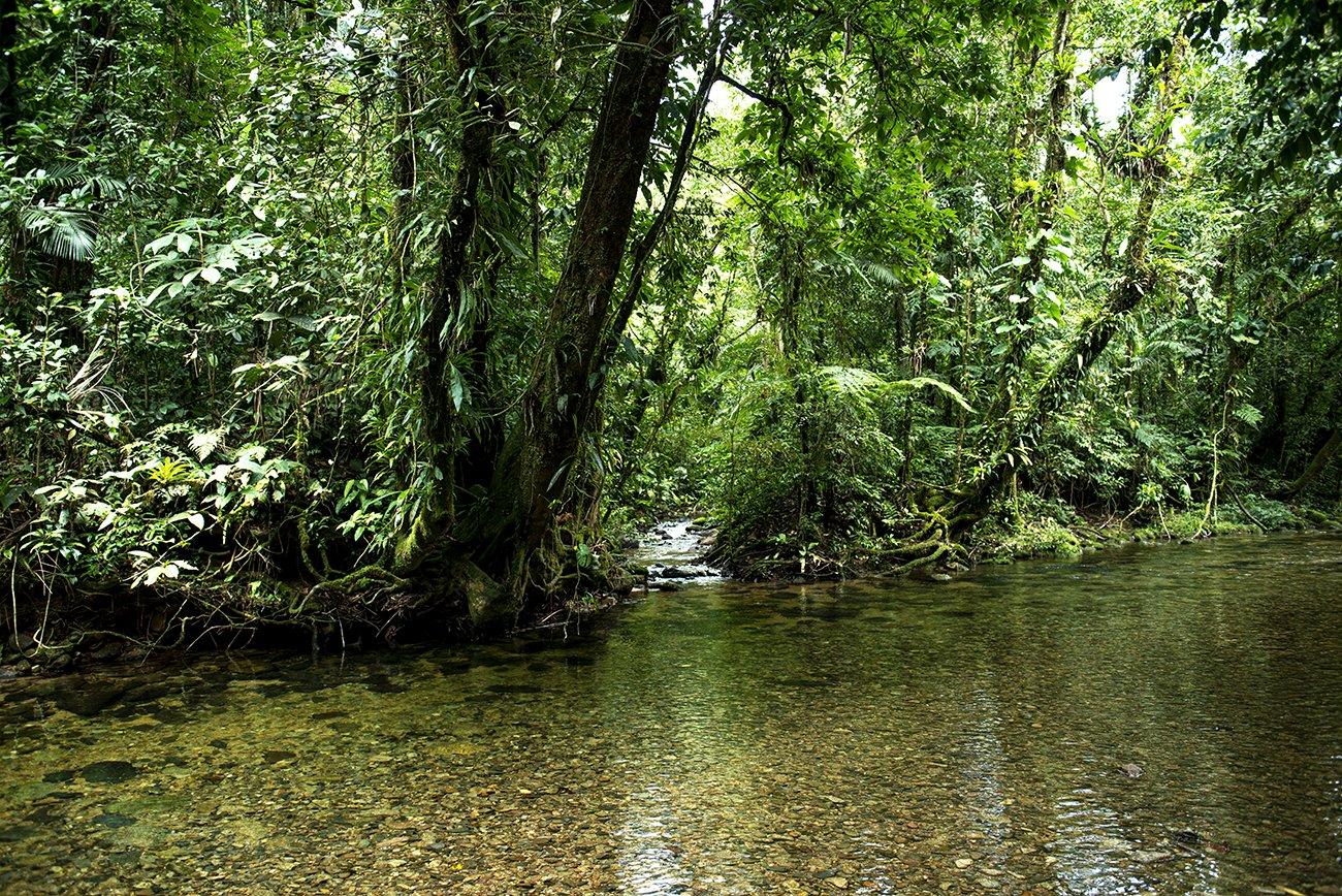 imagem de rio na mata Atlântica