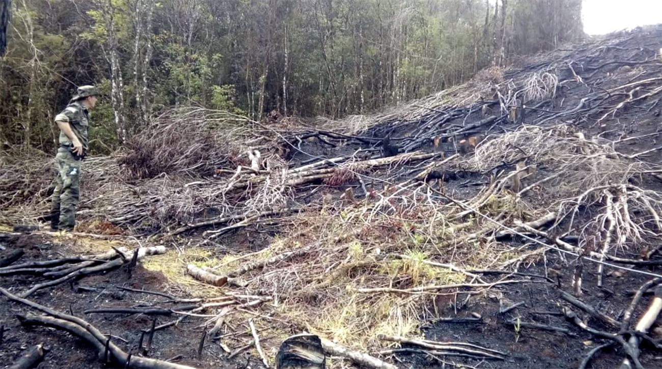imagem de desmatamento na mata atlântica