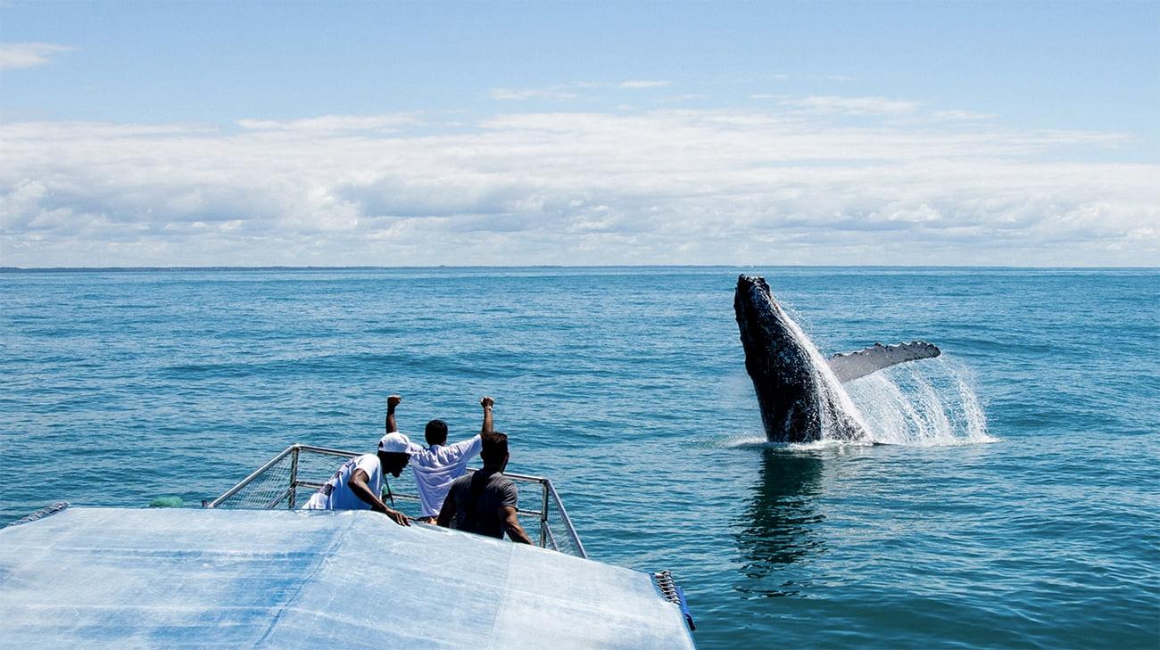 imagem de baleia saltando