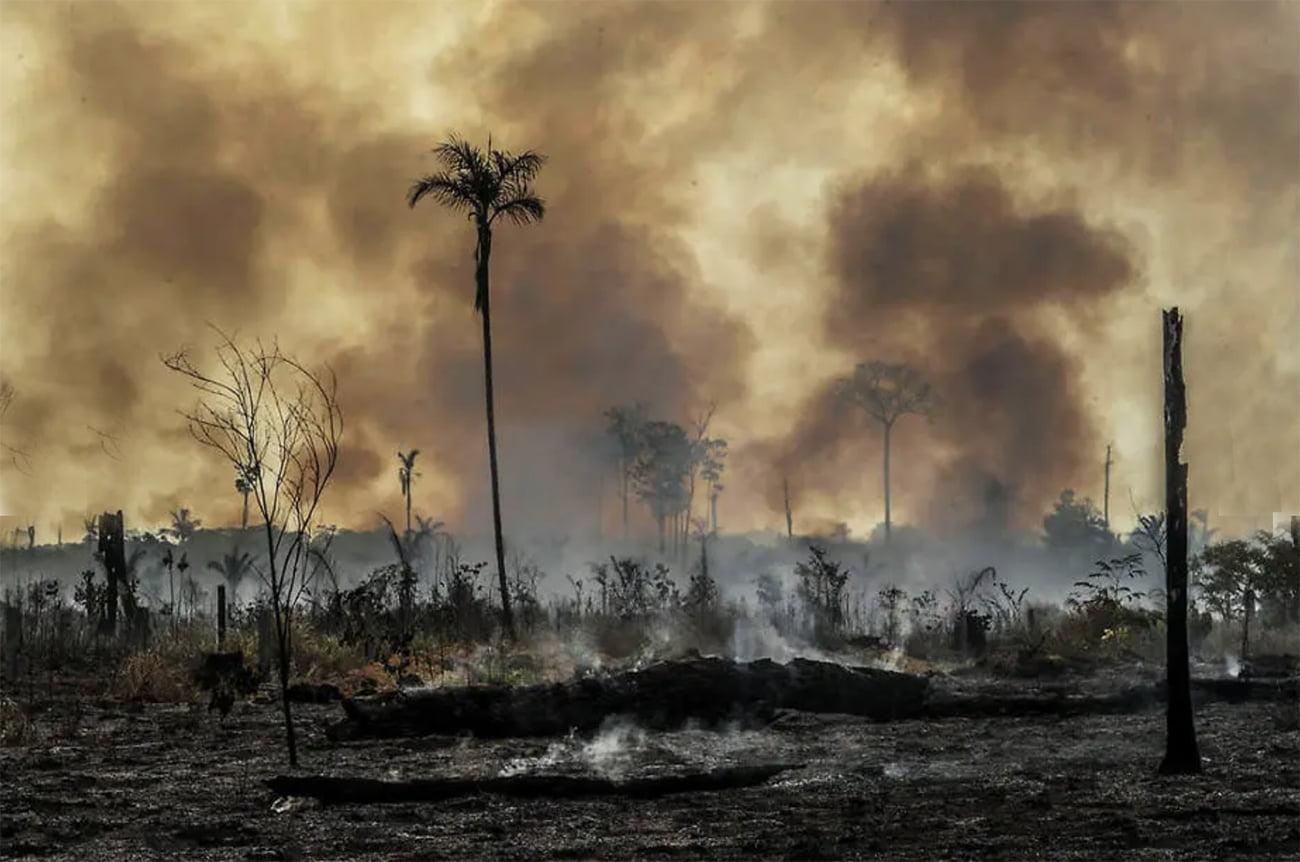 imagem de desmatamento amazônia 2020