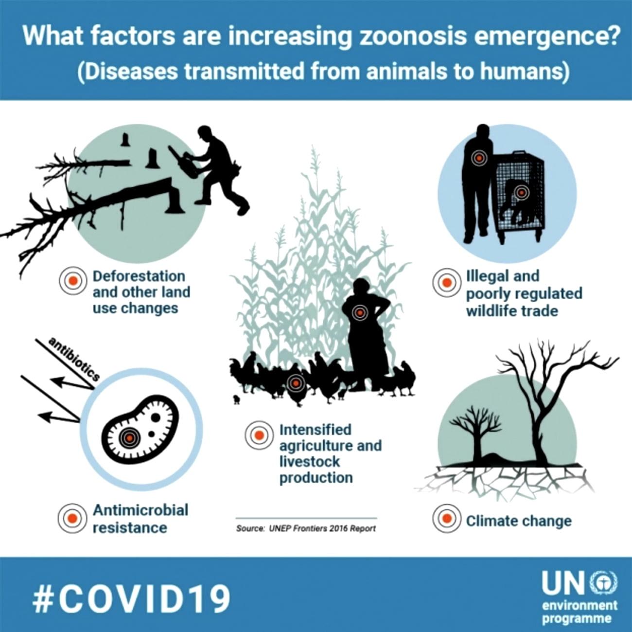 infográfico da ONU sobre fatores que aumentam doenças zoonóticas