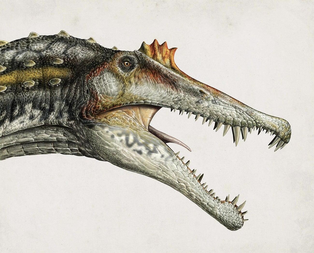 desenha da cabeça de um Espinossauro, um dinossauro