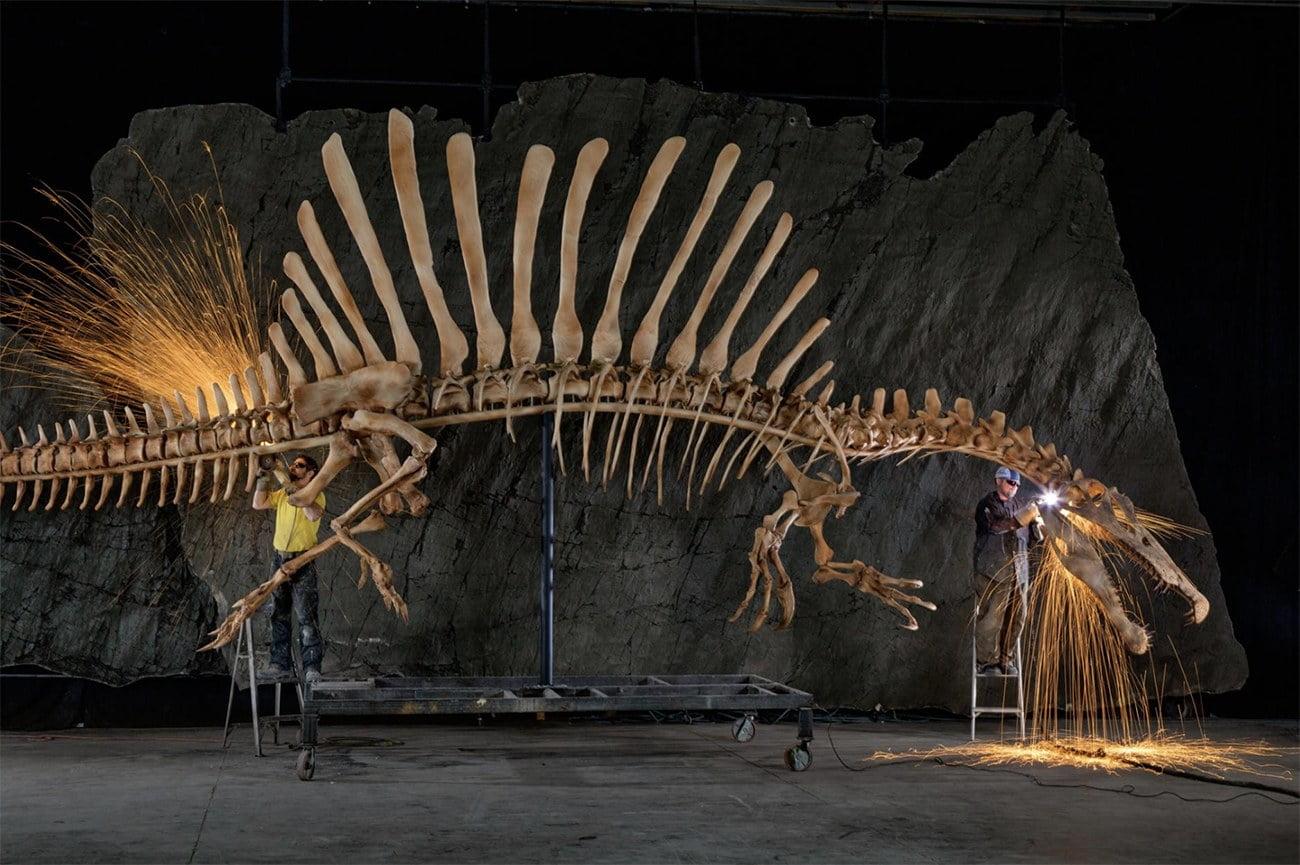 imagem de esqueleto de Espinossauro, um dinossauro