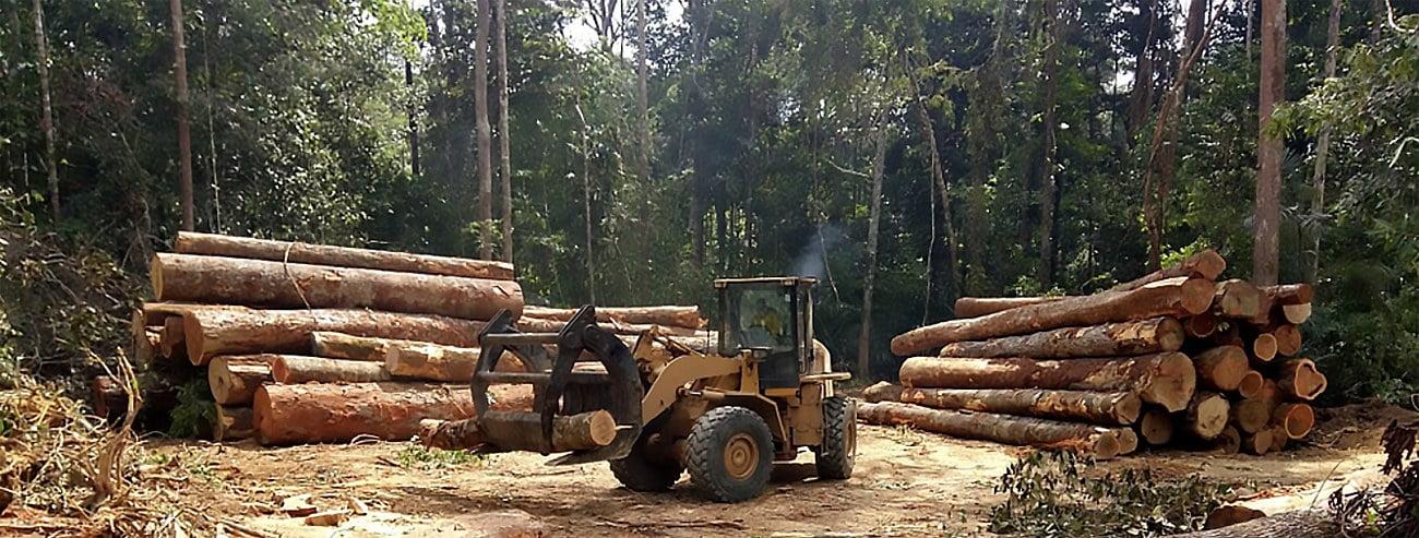 Imagem de desmatam não na amazônia