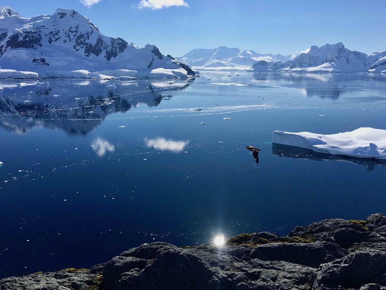 imagem de paradise harbor, Antártica