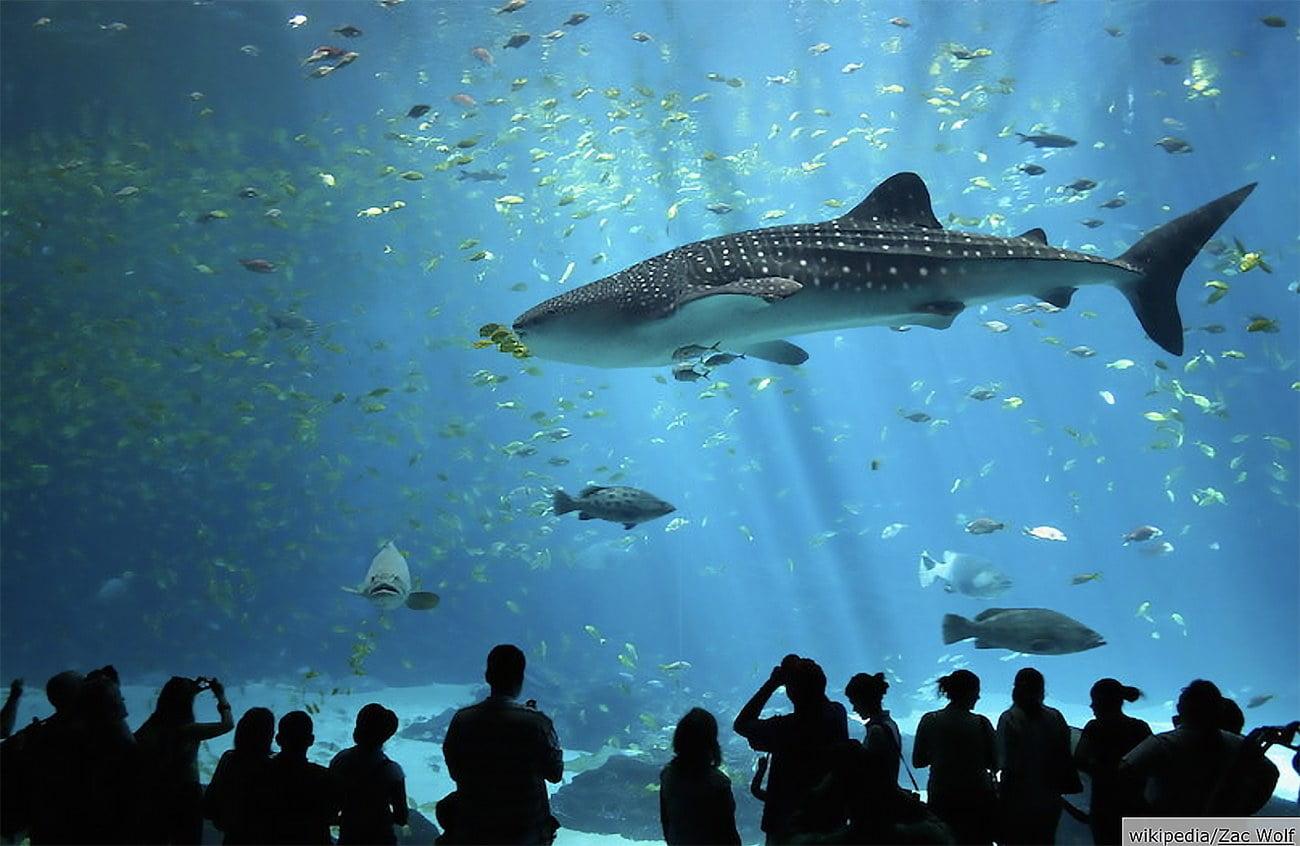 imagem de tanque do aquário de Atlanta, USA