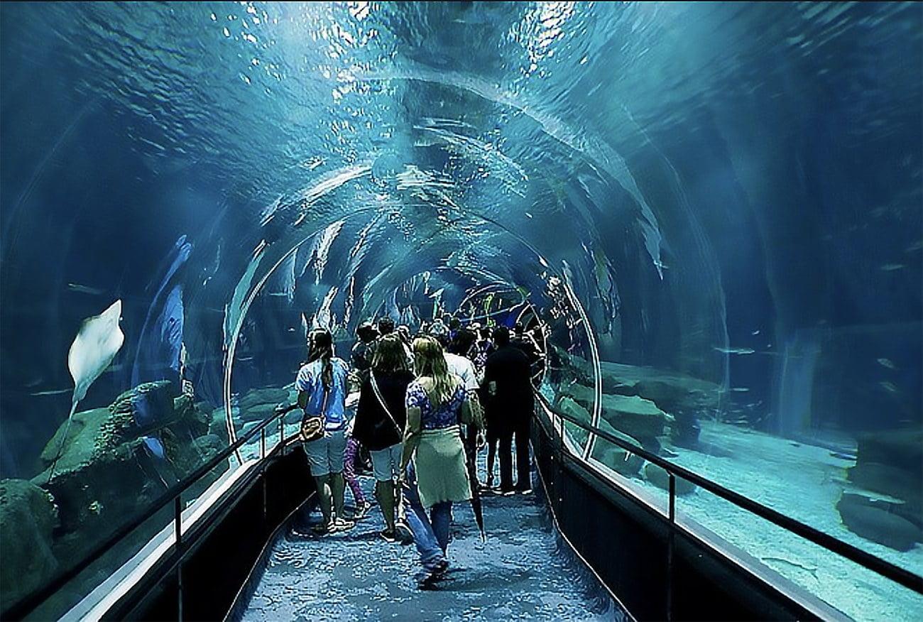 Imagem de túnel no AquaRio