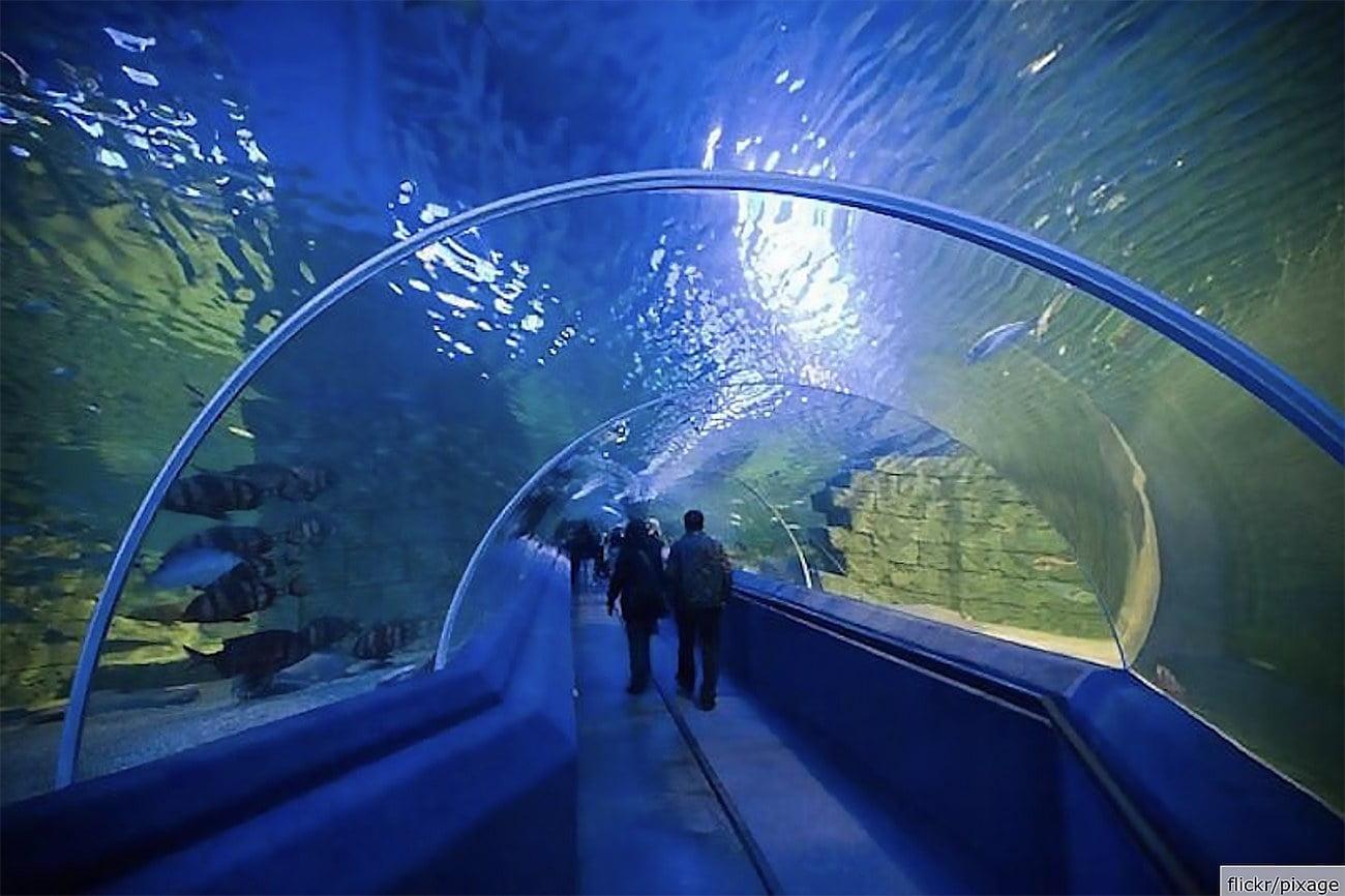 imagem de aquário na Turquia