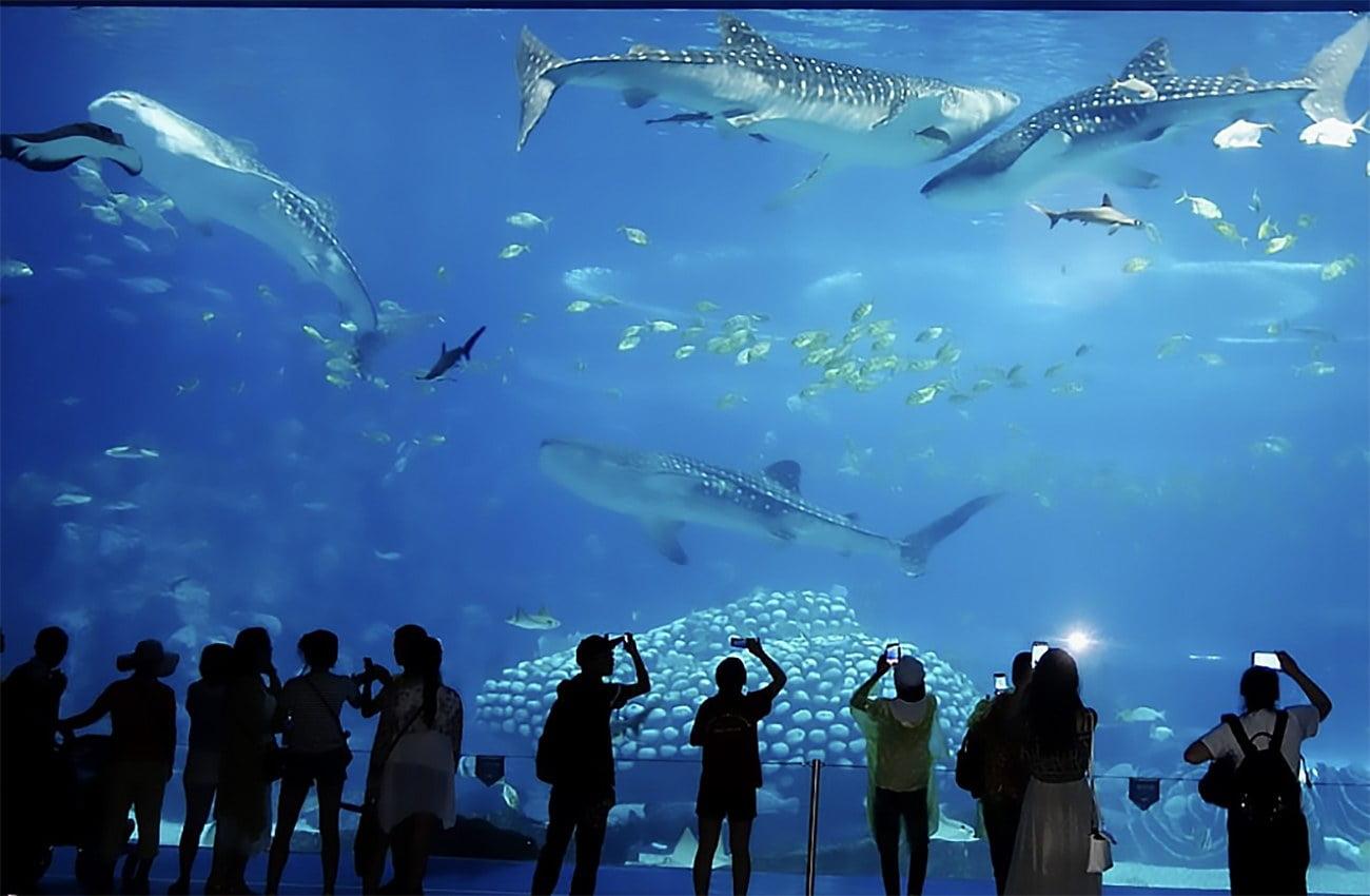 imagem do aquário Chimelong International Ocean Resort, na China