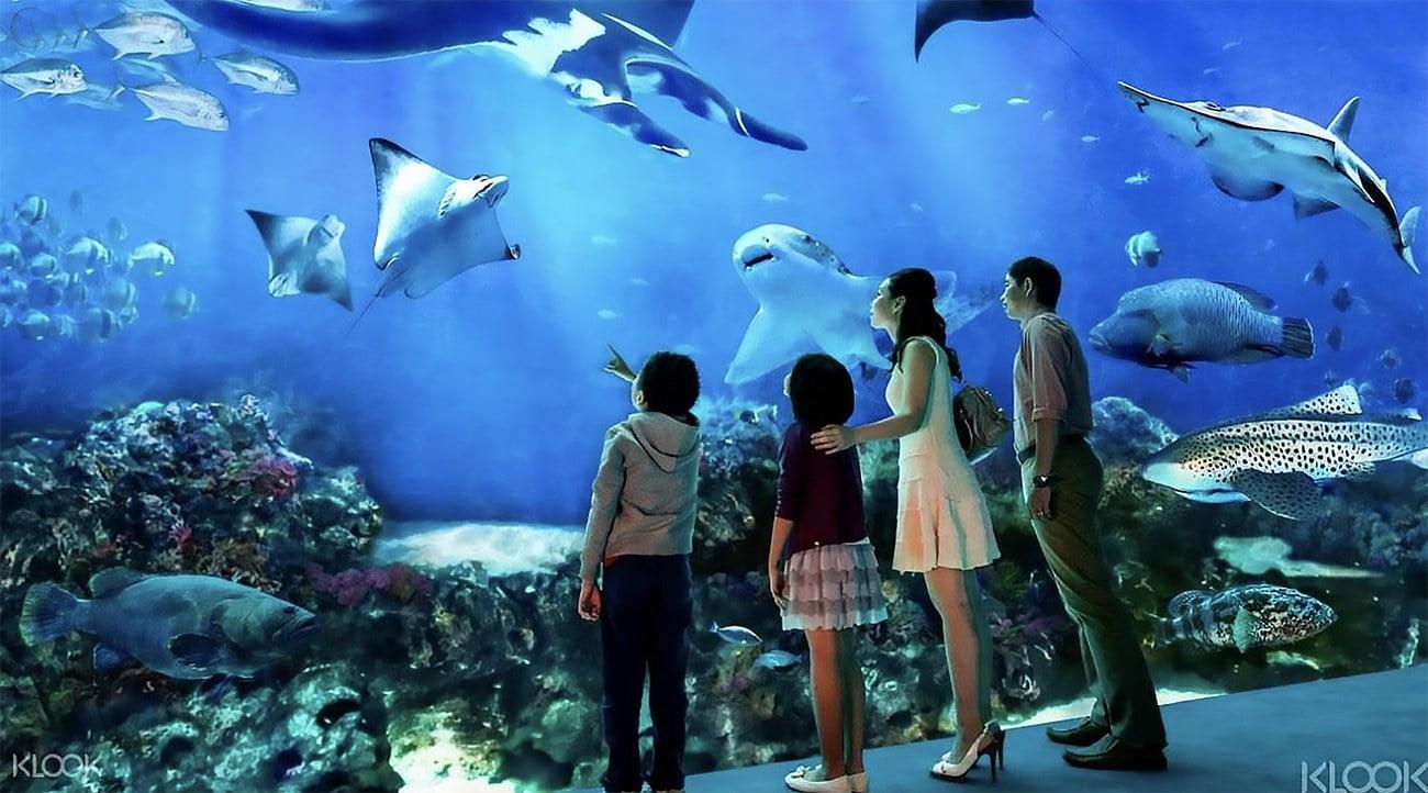 imagem do South East Asia Aquarium