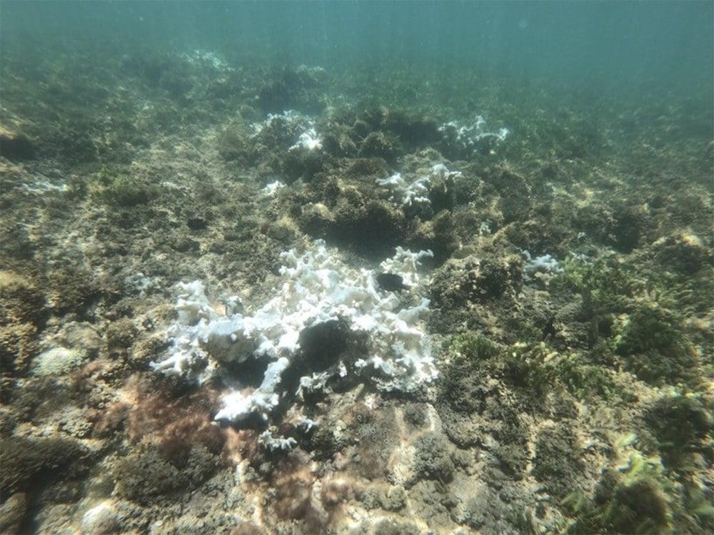 imagem de branqueamento de corais no Nordeste