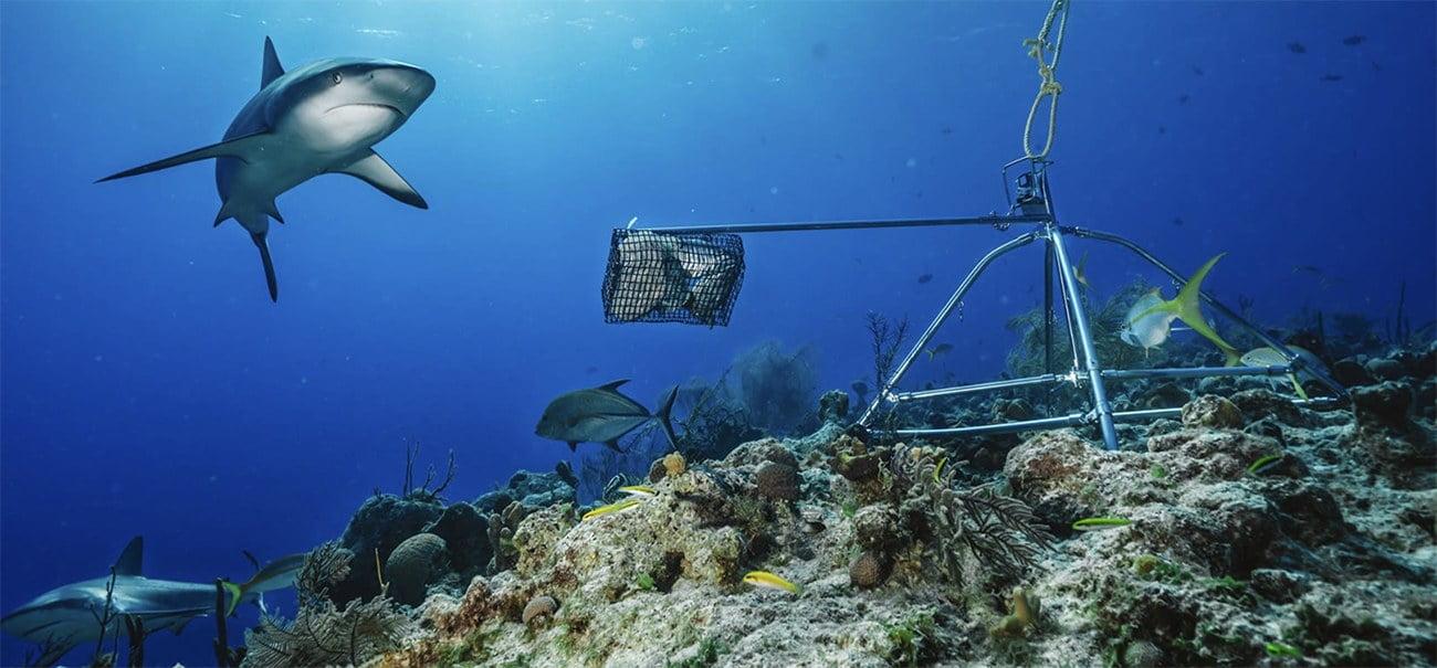 imagem de tubarões de recifes