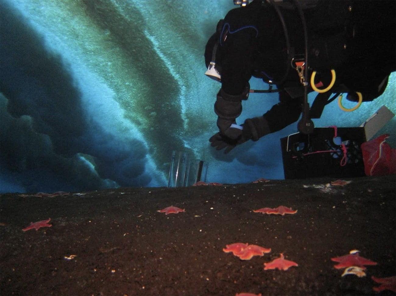 imagem de mergulhador na Antártica