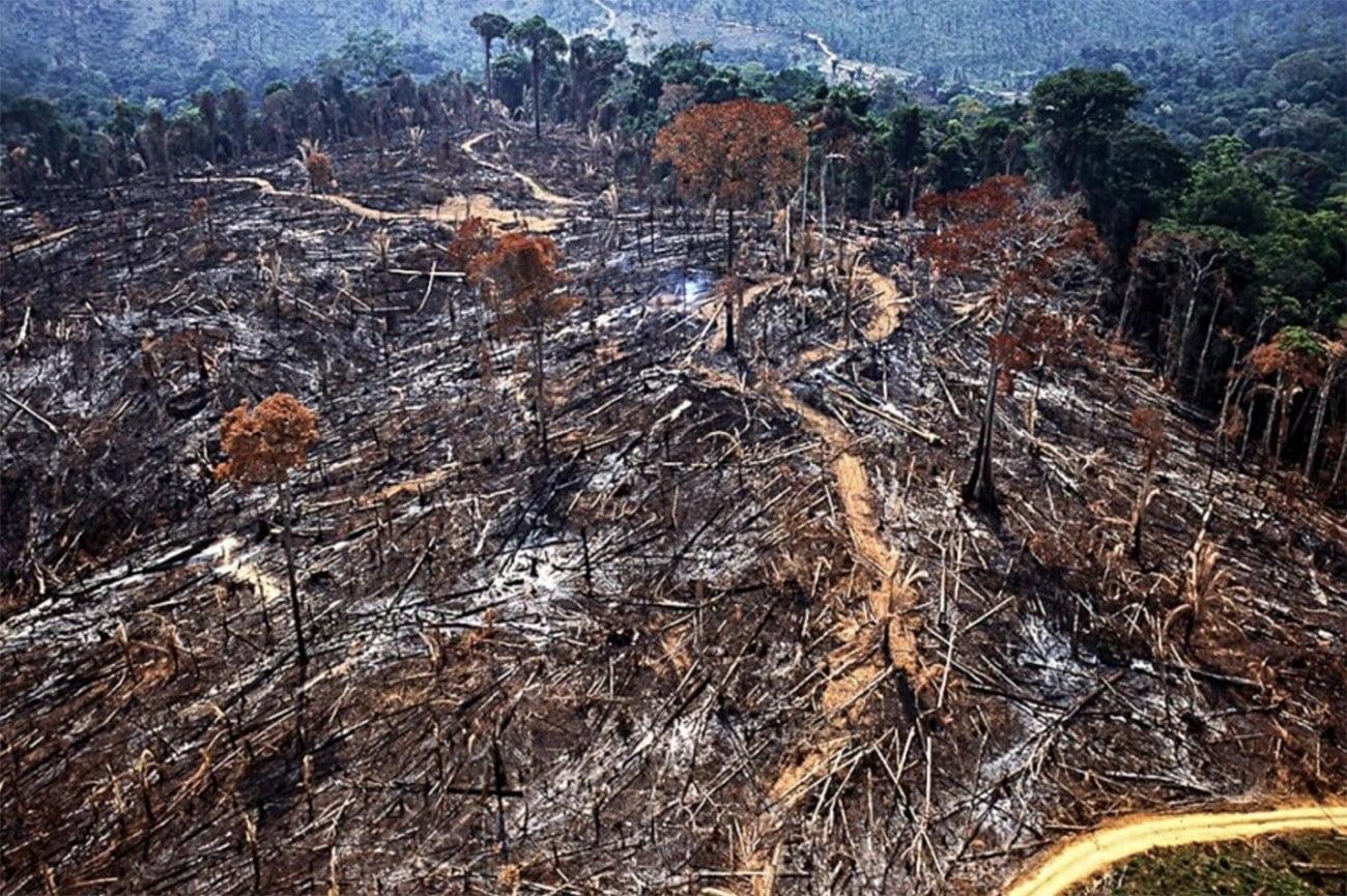 image de desmatamento na Amazônia