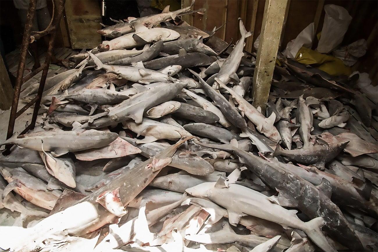 imagem de porão de navio cheio de peixes