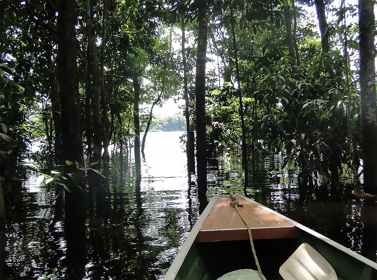 imagem de rio em Anavilhanas