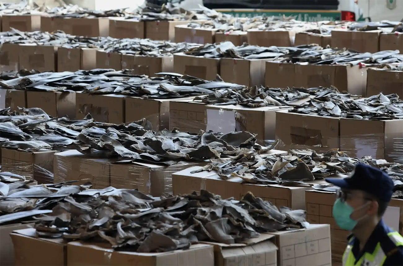 imagem de barbatanas de tubarão em depósito