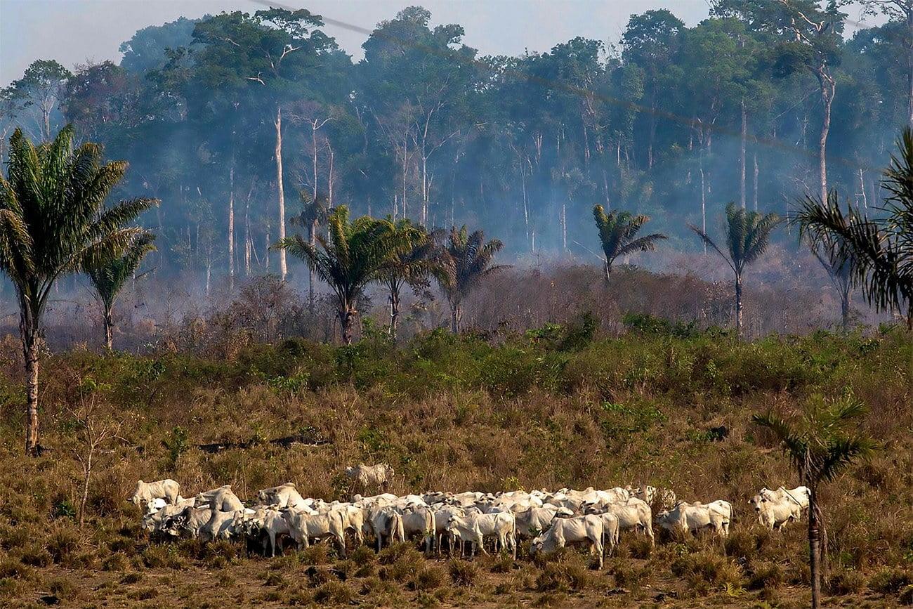imagem de desmatamento na Amazônia