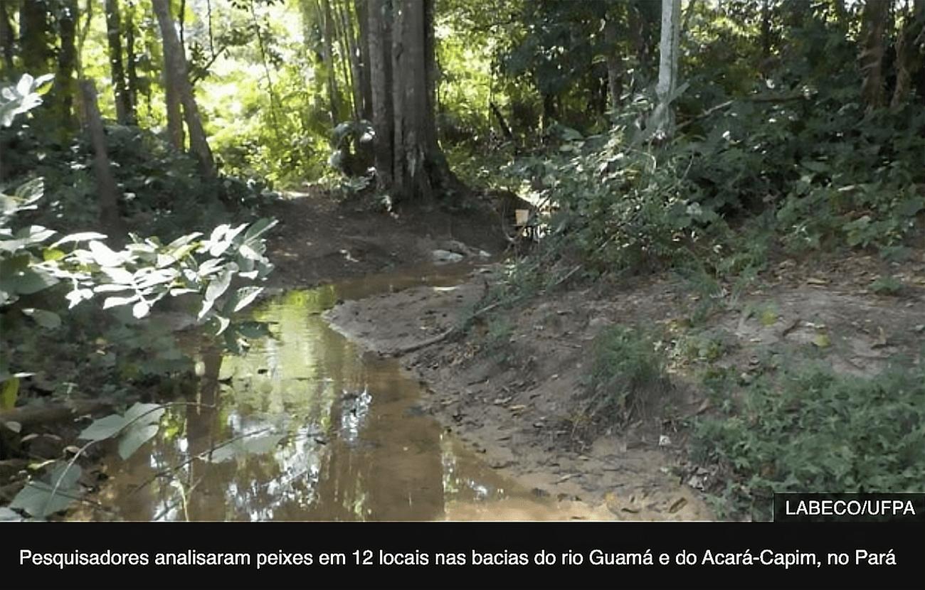 imagem de igarapé na Amazônia