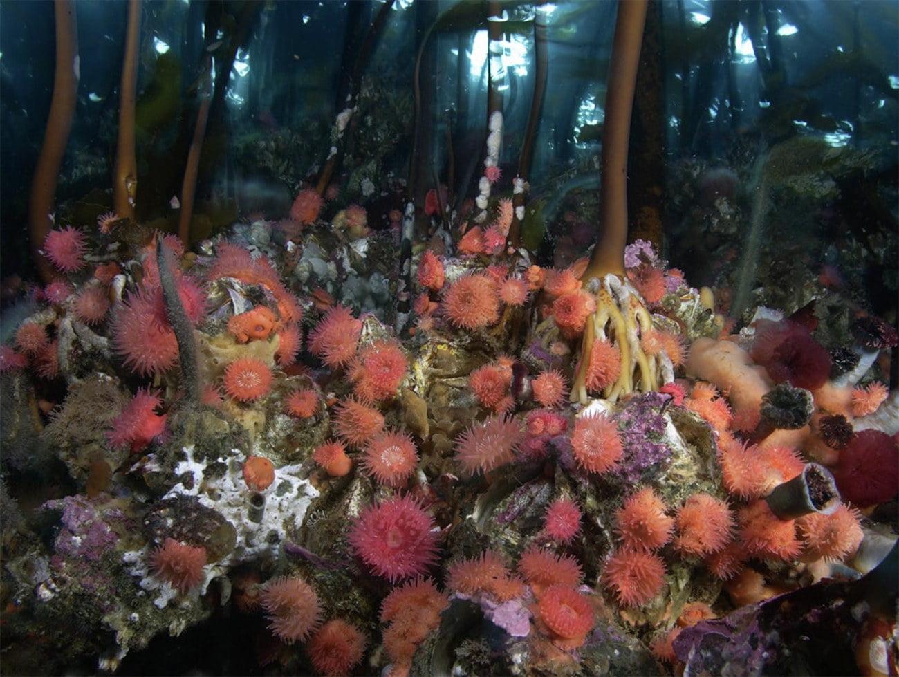 imagem de gramas marinhas vermelhas