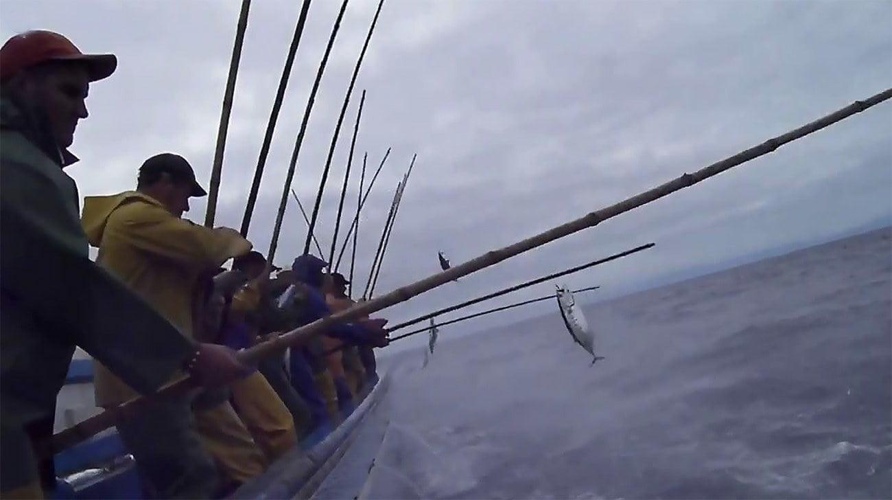 imagem da pesca do bonito listrado